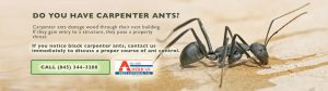 Tim Mills Pest Control for Carpent Ant issues Orange County NY