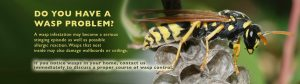 Tim Mills American Pest Control Wasps