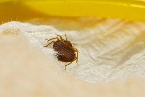 Tim Mills American Pest Control bed-bug