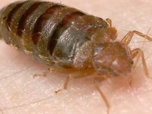 pest-control-bed-bug-service-orange-county-ny
